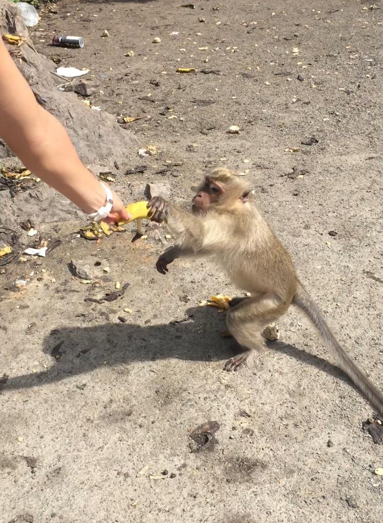 Monkey Krabi Ao Nang